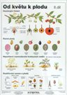 Od květu k plodu II - tabulka A4
