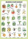 Zelenina z naší zahrady- tabulka A5