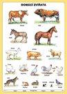 Domácí zvířata - tabulka A4