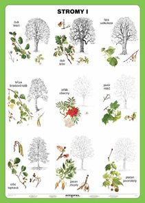 Stromy I - tabulka A5