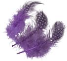 Dekorativní peříčka Guinea 20 ks, fialová