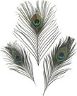 Dekorativní peříčka paví 3 ks