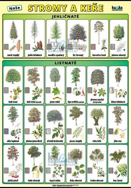 Naše stromy a keře XL - výukový plakát