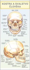 Kostra a svalstvo člověka - leporelo