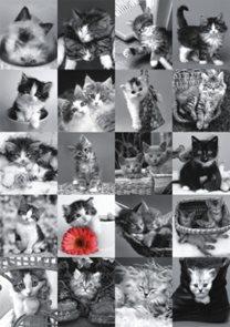 Puzzle 1500 ks - Kočky