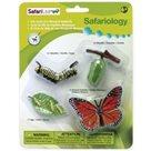 Životní cyklus - Motýl - blistr - Safari Ltd.