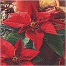 Stil Ubrousky 33 x 33 - Vánoční hvězda květina