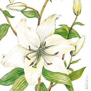 Ubrousky 33 × 33 - Lilie