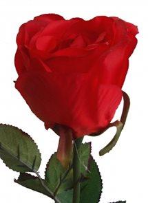 Dekorativní červená růže v luxusním provedení