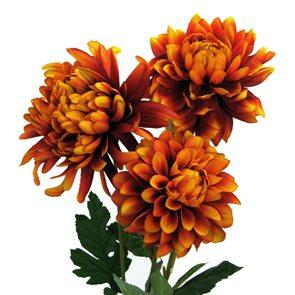 Luxusní kytice Chryzantémy 3ks