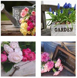 Obraz Květiny - Garden  39 x 39 cm
