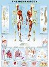 Puzzle Lidské tělo 1000 dílků