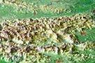 Rakousko - rámovaná reliéfní plastická mapa 77x57 cm