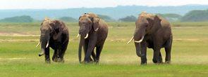 Záložka Úžaska - Sloni